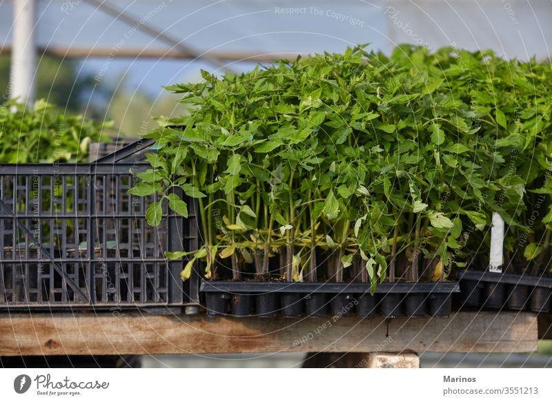 kleine pflanzbereite Pflanzen Gemüse Bepflanzung Gärtner Gärtnerei Gartenarbeit Wachstum Umwelt im Freien Natur grün Ackerbau Boden Tag horizontal wachsend