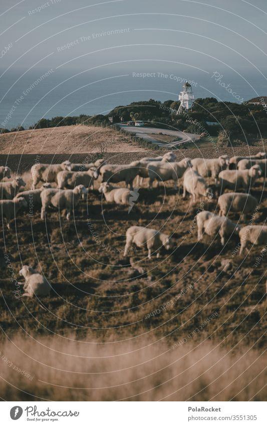 #AS# Leuchturm küsst Schafe Menschenleer Tiergruppe Herde Außenaufnahme Natur Landschaft Wiese Farbfoto Nutztier schafe zählen Merino Schafe Ohren Wolle
