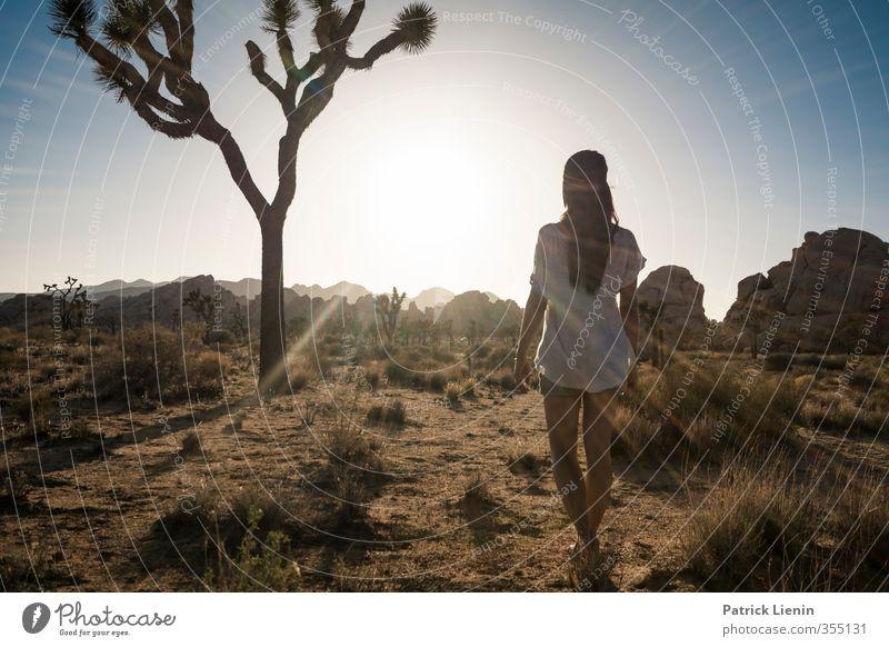 Phoenix Mensch Frau Himmel Natur Pflanze Sommer Baum Sonne Landschaft Einsamkeit Erwachsene Umwelt Leben Wege & Pfade feminin Sand