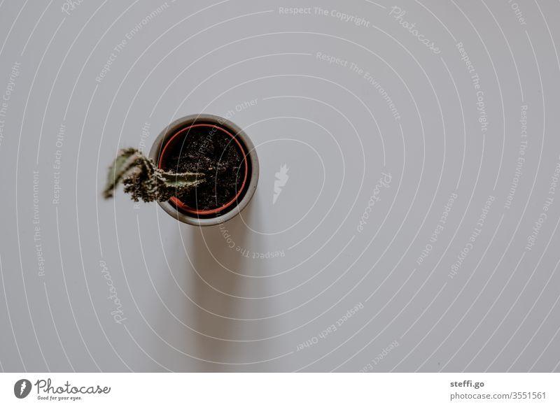 Kaktus im Blumentopf von oben auf neutralem Hintergrund Kakteen stachelig kaktuspflanze Pflanze grün Stachel Nahaufnahme Makroaufnahme Natur Detailaufnahme