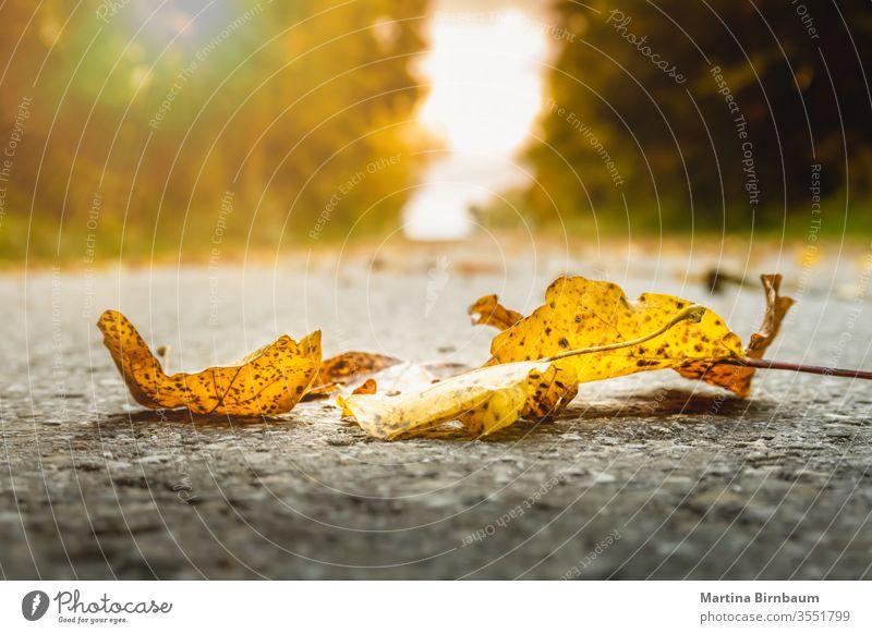 Goldenes Herbstlaub auf dem Boden pulsierend fallen hell Park rot Oktober Sonnenlicht Laubwerk Natur Saison gelb Sonnenschein grün Gras November Landschaft