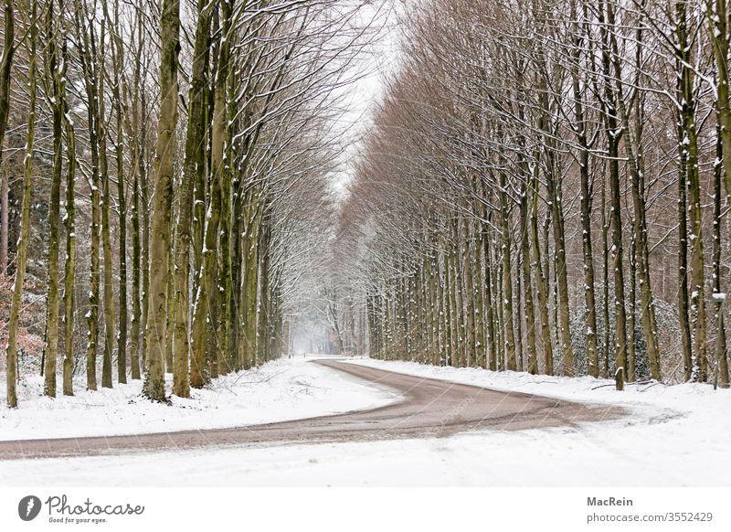 Kurvebreiche Allee baumallee Bäume baumreihe Straße kurven Winter Winterzeit Jahreszeit Schafe Natur Wald spaziergang idyllisch Perspektive niemand textfreiraum