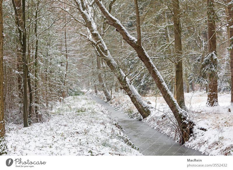 Bachlauf im Winter bach winter schnee winterlandschaft bäume verschneit kalt gefroren schräge bäume niemand textfreiraum idylle wald gewässer