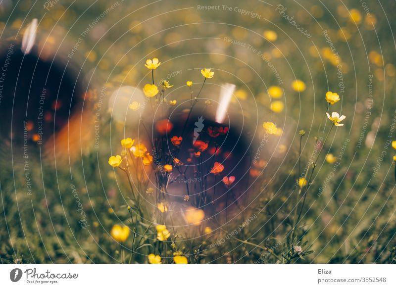 Blick auf gelber Butterblumen auf einer Blumenwiese durch eine lila Sonnenbrille. Experimentell. Sommer Farben retro draußen Natur experimentell Farbverzerrung