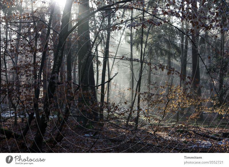 Sonnenlicht und Kälte im winterlichen Wald Sonnenstrahlen Winter Herbst Schnee Frost Bäume Laubwerk kalt Natur Menschenleer Farbfoto