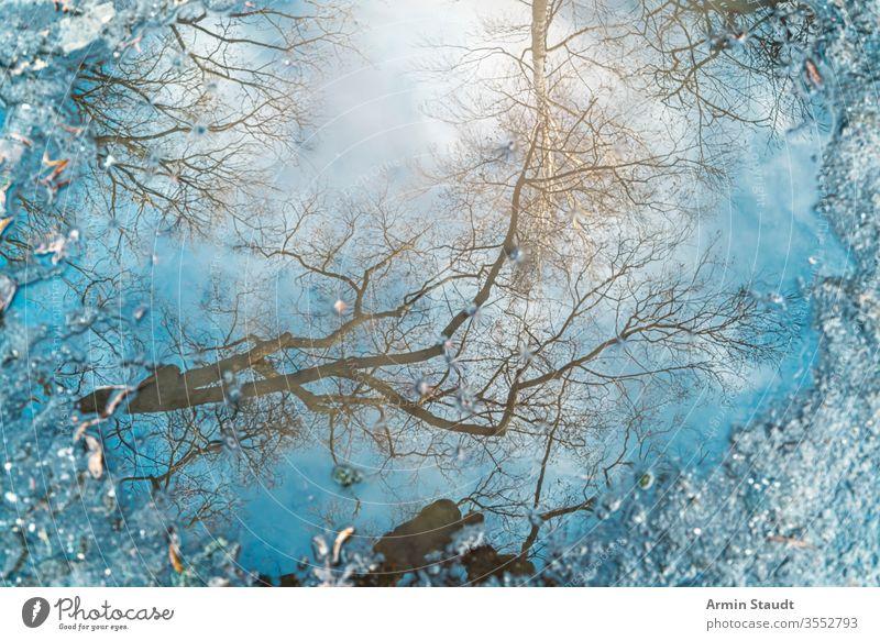 Spiegelung eines Baumes in einer Pfütze für Hintergründe abstrakt Hintergrund Birke blau Unschärfe verschwommen Ast hell übersichtlich defokussiert Umwelt Licht