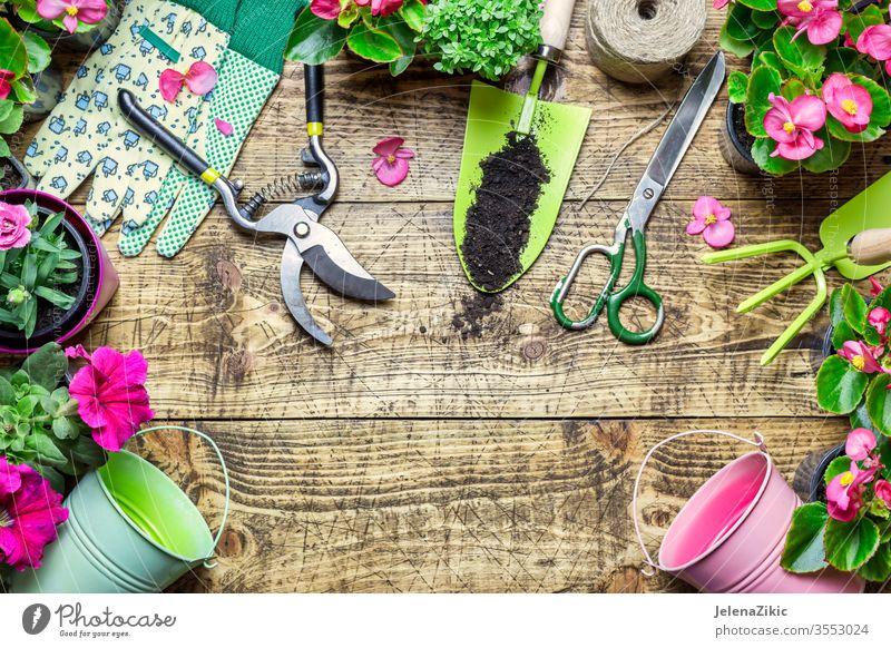 Komposition mit Blumen und Gartengeräten grün Sommer Frühling Wachstum Natur Gartenarbeit Bewässerung Blumentopf Haus im Freien Pflanze geblümt Topf botanisch