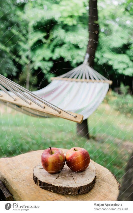 Wiegenetz im Hinterhof am Wald Abenteuer Äpfel Windstille Konzept leicht genießen Freiheit Möbel Garten grün Grün Hängematte Gesundheit Feiertag idyllisch