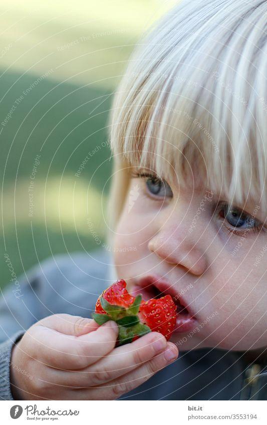 Ebbelle... Erdbeere rot essen Hand Mund Kind Mädchen gepflückt Snack Picknick fruchtig Speise genießen saftig Sommer Foodfotografie Natur schön öko ökologisch