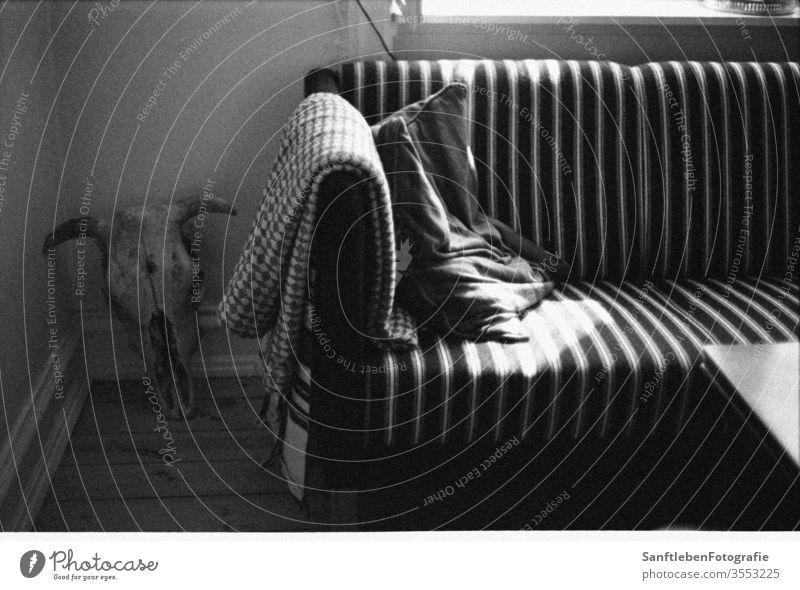 Sonniges Sofa Sonnenstrahlen sonniger Tag Ruhemöbel Kälte entspannende Zeit Decke skandinavischer Stil Wohnzimmer Häusliches Leben gemütlich Windstille