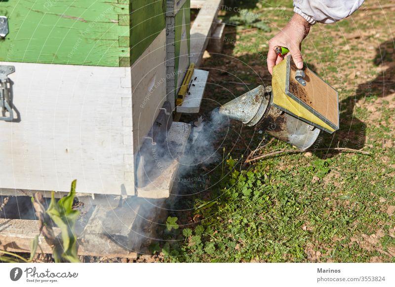 Bienenzüchter mit dem Bienenrauchraucher arbeiten Zelle Insekt Bienenzucht Beteiligung Landwirtschaft Rahmen Wabe Wachs Bienenkorb Natur Arbeiter Imker Liebling