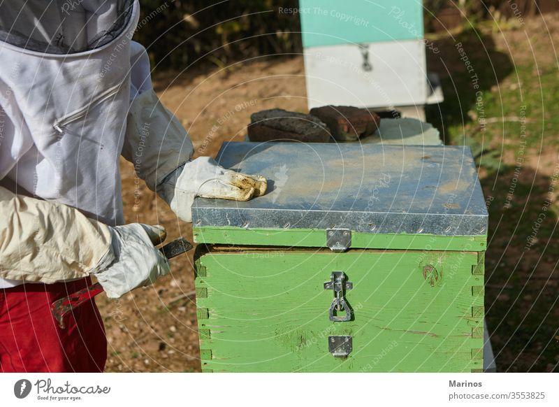 Imker, der in der Imkerei arbeitet. arbeiten Zelle Insekt Bienenzucht Beteiligung Landwirtschaft Rahmen Wabe Wachs Bienenkorb Natur Arbeiter Liebling Ackerbau