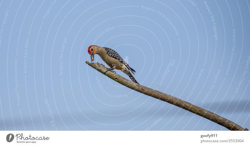 Futterdepot Specht Vogel Tier Natur Außenaufnahme Tierporträt Nahaufnahme Wildtier Tiergesicht Flügel Ast Umwelt Farbfoto Schnabel natürlich Blick Feder