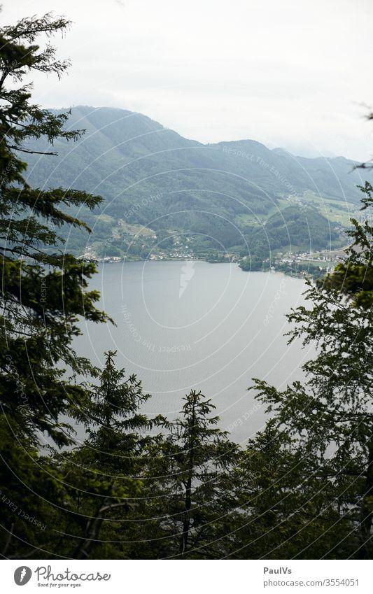 Blick auf Traunsee, Gmunden und Altmünster vom Traunstein durch Bäume Wald Berg Bergwald Hochwald See Salzkammergut bewölkt Berge Gebirge Gipfel Alpin Alpen