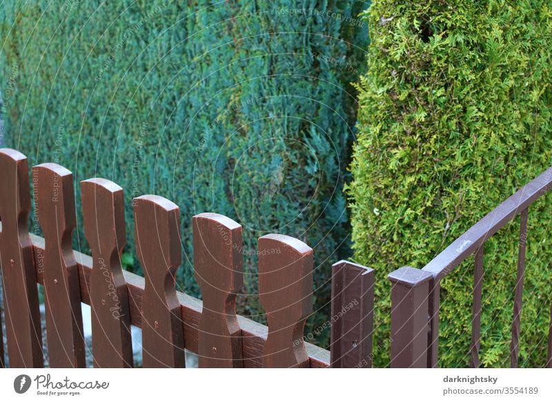 Hecken und Zäune an einer Grundstücksgrenze Menschenleer Grenze Garten Sommer weiß Lebensbäume pflanzen grün Gated community renovierungsbedürftiger
