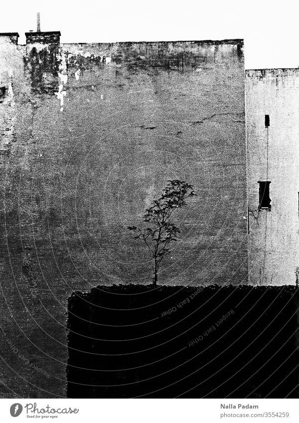 Natur trifft Urbanität Hinterhof menschenleer Schwarz Weiß analog Haus Außenaufnahme Gebäude Baum Schwarzweißfoto Stadt Einsamkeit Bäumchen David und Goliath