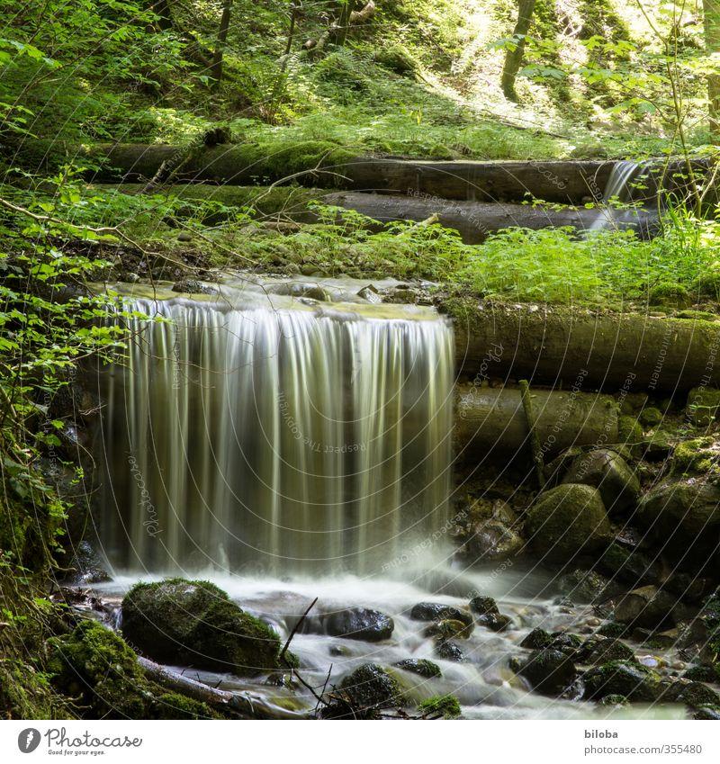 Quelle Natur Pflanze Tier Wald Bach Wasser rein Qualität Umwelt Sauberkeit Trinkwasser Urelemente Stein Wasserfall Sonnenlicht Farbfoto Außenaufnahme