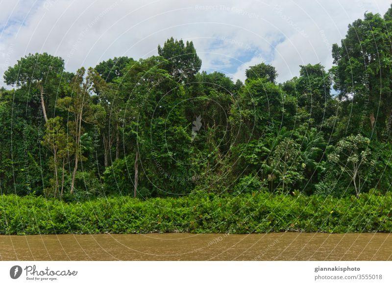 Blick von einem Flussschiff, Amazonasbecken, Brasilien Abenteuer Amazonas-Becken schön Schönheit der Natur Farbe farbenfroh extrem Dschungel Wahrzeichen