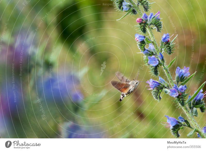 Schwalbenschwanz Natur Pflanze Tier Frühling Sommer Klima Schönes Wetter Blume Gras Blatt Blüte Garten Park Feld Wald Wildtier Schmetterling 1 wählen gebrauchen