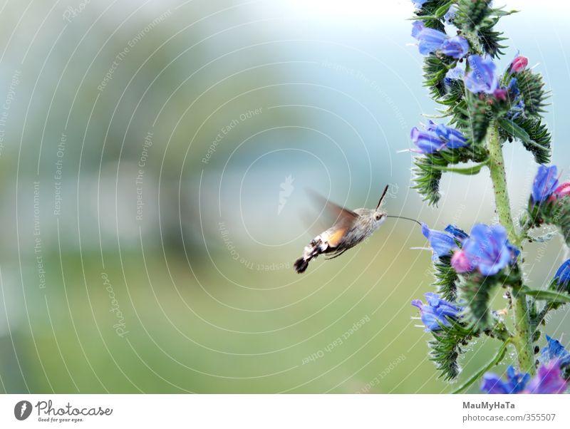 Himmel Natur Sommer Pflanze Sonne Blume Tier Blatt Wald Gras Frühling Blüte Garten Park fliegen Feld