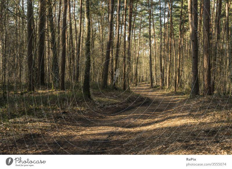 Morgenspaziergang im Wald. Wanderweg Waldweg Fahrrad bike Hund Baum Pfad Moos Heide Landschaft Lüneburg Sport Naturschutzgebiet reservat Herbst Winter