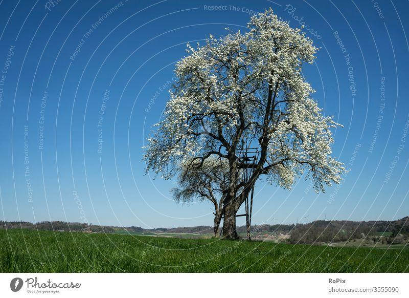 Blühender Baum bei wolkenlosem Wetter. Hügel England peak district Meadow wiese gras Mauer baum tree Landschaft Natur Sommer summer Wolken Himmel sky Gebirge