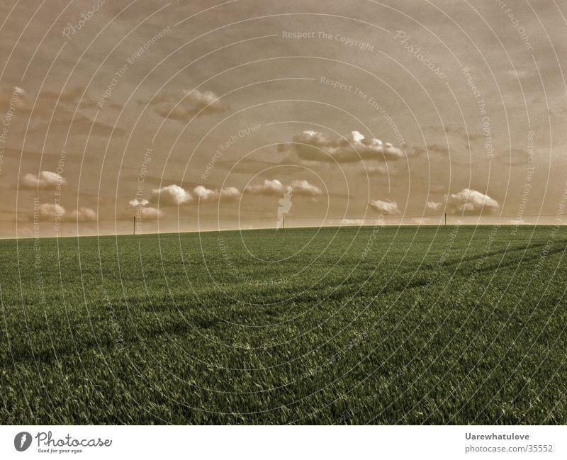Fernweh Wiese Wolken Horizont Grass Ferne Himmel Landschaft Natrur