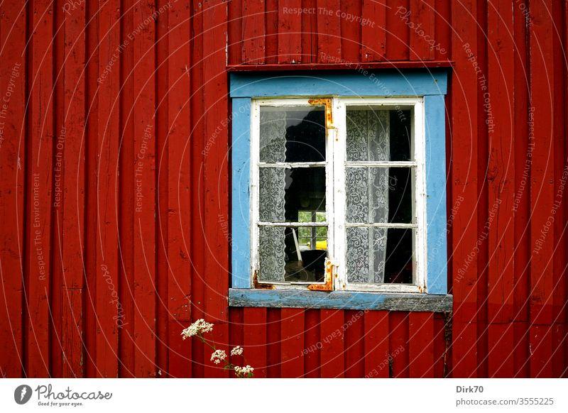 Irgendwo in Norwegen - blaugerahmtes Fenster eines roten Holzhauses Haus Detailaufnahme detail Fensterrahmen Vorhang Spitze Norwegenurlaub Bretterwand
