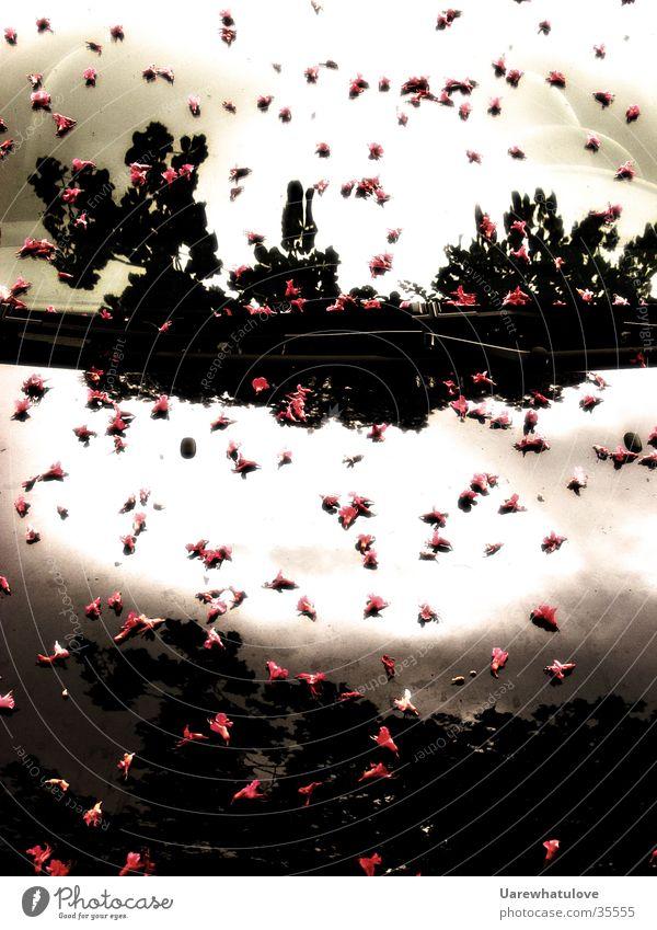 Immer wenn es Blüten regnet Sonne Blüte PKW Perspektive frontal Fototechnik Motorhaube Scheibenwischer