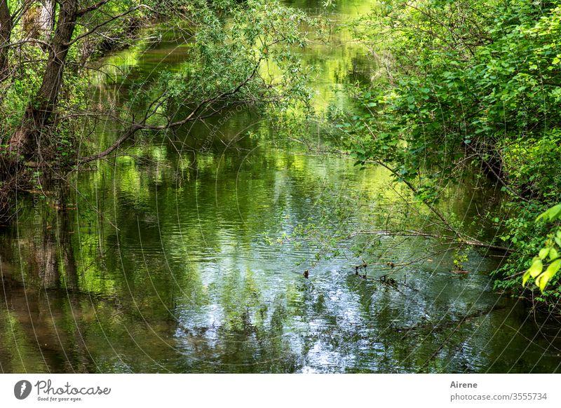 Urwald in Oberbayern | Urlaub daheim Fluss ruhig grün Auwald Flussufer Wald Landschaft Natur Wasser Einsamkeit Wasserspiegel Teich Wasserspiegelung See Seeufer