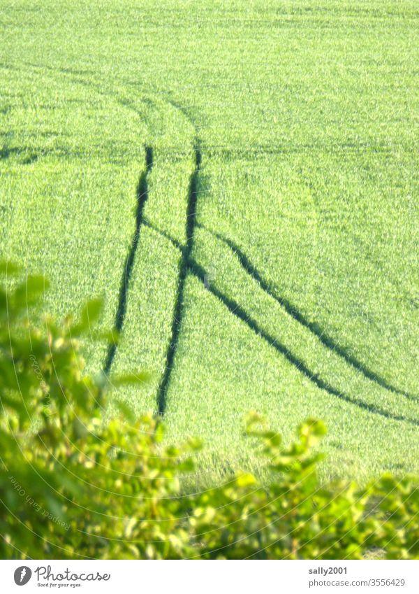 Spurrinnen... Feld Getreide Spuren Einschnitte Weiche Landwirtschaft Eindruck Ähren grün Korn Wachstum Verkehr Wege & Pfade Sommer Ackerbau