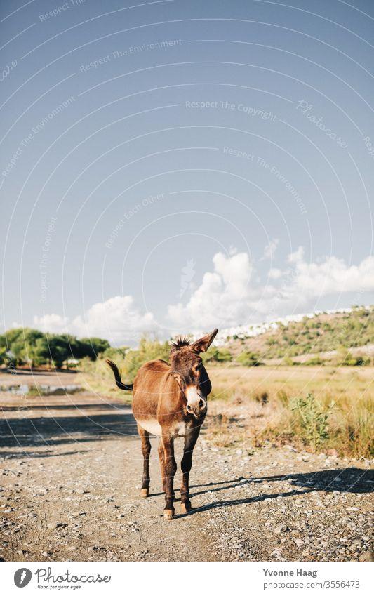 Freudiger Esel Sommer Sommerurlaub Eselsohr Außenaufnahme Tier Farbfoto Tierporträt Natur Neugier Blick in die Kamera braun Menschenleer Nutztier Tiergesicht