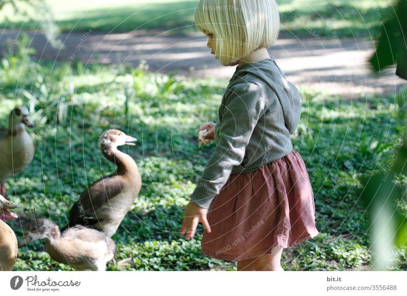 Kleines, süßes, niedliches, blondes Mädchen mit lustigem Pony, steht in der Natur mit traumhaft, schönem Licht, zum Enten füttern. Das Kind hält Brot, als Tierfutter in der Hand, wirft es zu den Tieren und freut sich über deren Hunger.