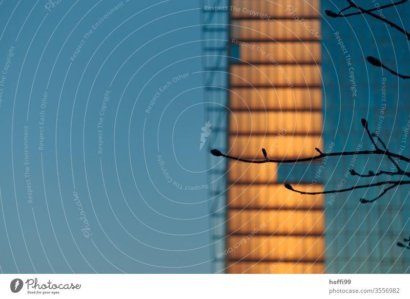 Zweige mit Knospen vor Hochhaus mit reflektierendem Sonnenuntergang Baum Zweige und Äste Ast Urbanisierung urban Licht minimalistisch Bankgebäude Wohnhaus Büro