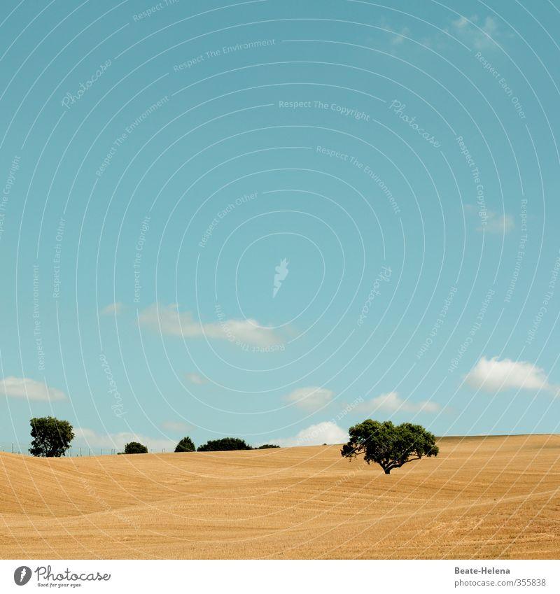 Textfreiraum | Heiter bis wolkig Himmel Natur blau grün Sommer weiß Sonne Baum Landschaft Wolken Wege & Pfade braun Zufriedenheit Feld leuchten ästhetisch