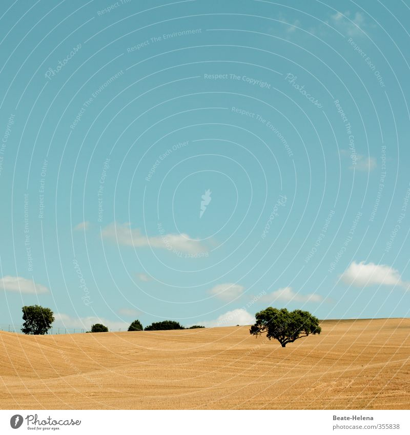 Textfreiraum | Heiter bis wolkig Natur Landschaft Himmel Wolken Sonne Sommer Schönes Wetter Baum Feld Wege & Pfade leuchten dehydrieren warten ästhetisch blau