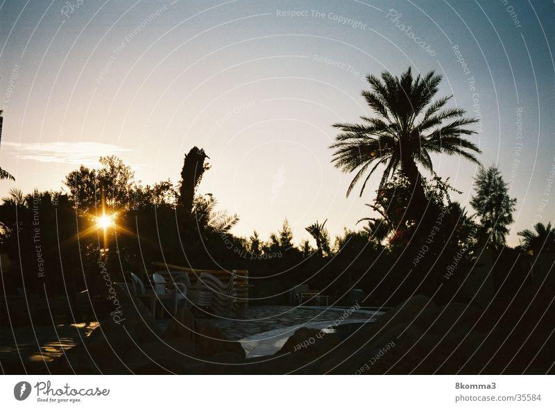 Palmenhain Sonnenuntergang Ferien & Urlaub & Reisen Tunesien Zufriedenheit