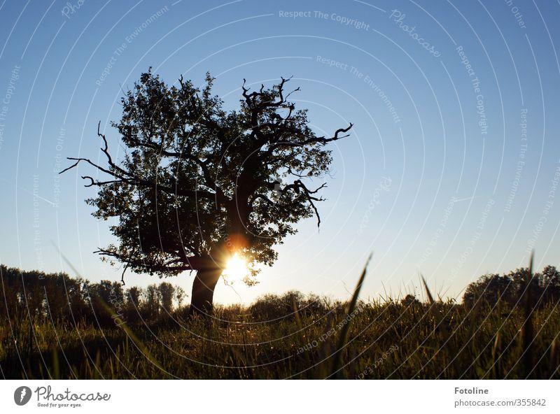 Lieblingsbaum Himmel Natur blau Sommer Pflanze Sonne Baum Landschaft Umwelt Wiese Gras hell Feld Wolkenloser Himmel