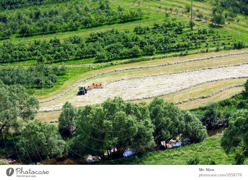 Heuernte Landwirtschaft Ernte Gras Natur Arbeit & Erwerbstätigkeit Pflanze Landschaft Hügel Wiese Feld Wachstum grün frisch Bauernhof Landleben Sommer ländlich