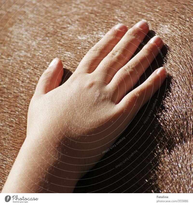 Streicheleinheit Mensch Kind Hand Finger Fell hell natürlich Wärme weich braun Streicheln Farbfoto mehrfarbig Außenaufnahme Detailaufnahme Tag Licht Sonnenlicht