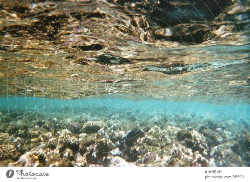 Unterwasser tauchen Schnorcheln Unterwasseraufnahme Meer durchsichtig Fischschwarm Korallen Luftblase Licht Sonne Rotes Meer blau Wasser Natur Bewegung