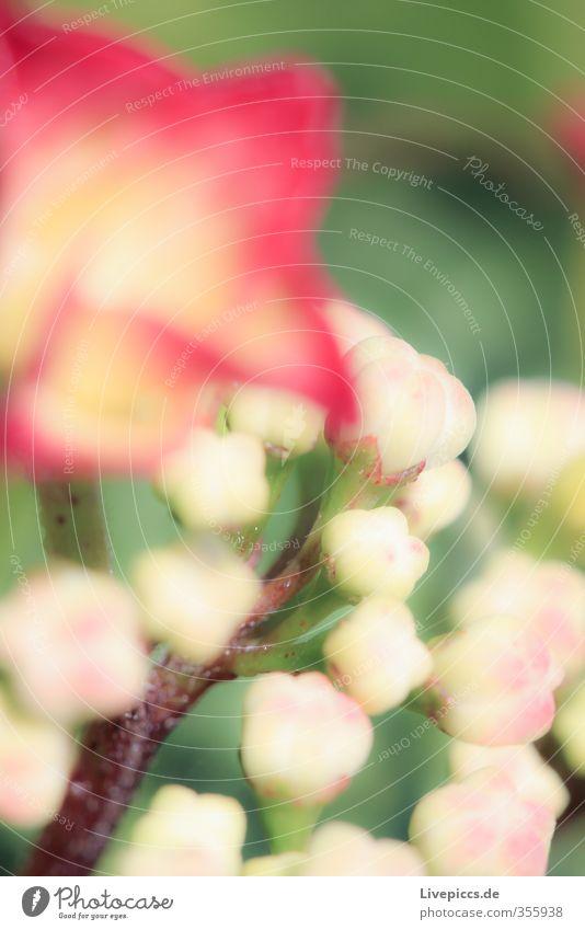Blume im Frühling Natur schön Pflanze Sonne rot Blatt Umwelt Blüte Garten natürlich Park orange rosa leuchten