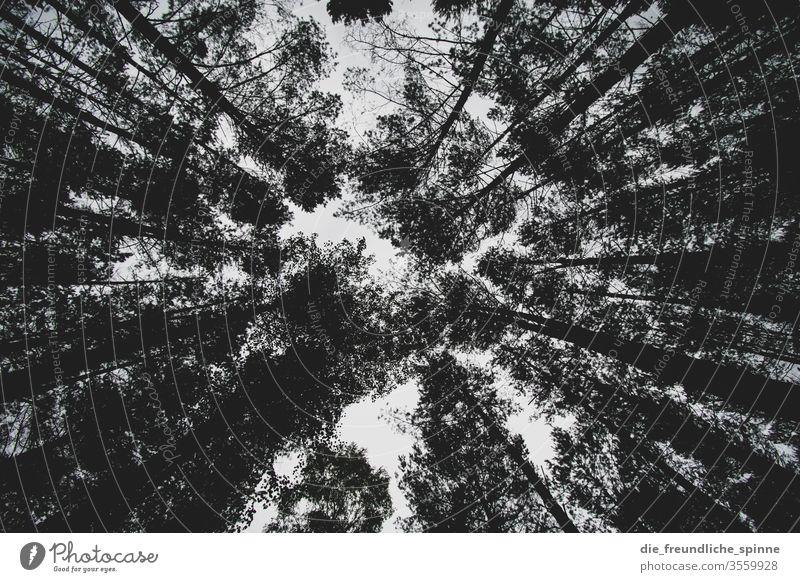Blick in den Wald IV Stamm Baumstamm Nadelbaum Laubbaum Dürre mystisch magisch Gothic trocken ast grün wald Ast Pflanze Menschenleer Umwelt Tag Natur Landschaft