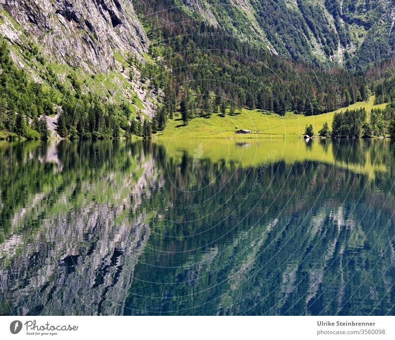 Spiegelung einer Alm im Wasser des Königsees in Berchtesgaden Alpen See Gebirge Berge Gestein Obersee Königssee Schönau Wald Bäume Gebirgssee Fischunkelalm