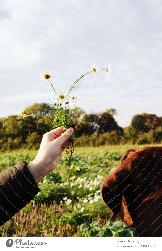 Hund auf Wiese betrachtet Blumen in der Hand Neugier Stimmung schön Perspektive Feld Himmel Natur Außenaufnahme Farbfoto Umwelt Schönes Wetter Frühling