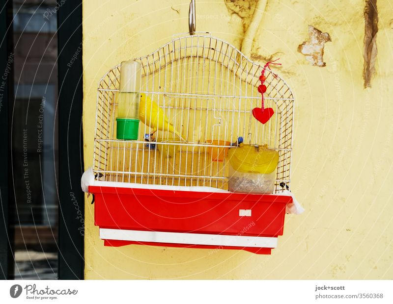 im goldenen Käfig sitzen Kanarienvogel gelb Haustier Tierporträt Vogelkäfig Ziervogel haustier Fressnapf gefangen geschlossen Tierhaltung ausbruchsicher