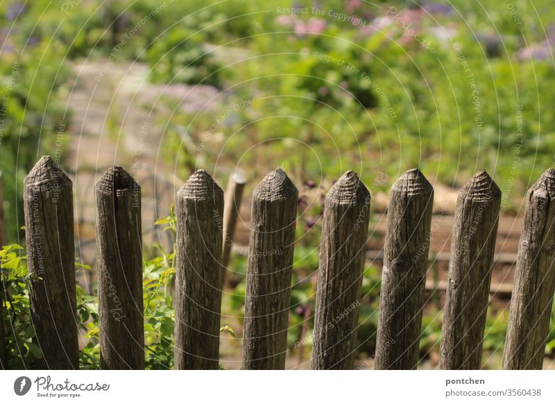 Blick in einen blühenden Garten über einen Holzzaun. Beete, anpflanzen. garten beete grün Frühling Pflanze Natur Blüte natürlich