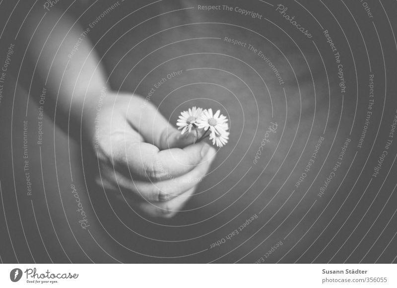 Für die kleine A. feminin Junge Frau Jugendliche Erwachsene Bauch positiv Liebe Geschenk von herzen herzlich schwanger Mutter Hand Gänseblümchen Blume