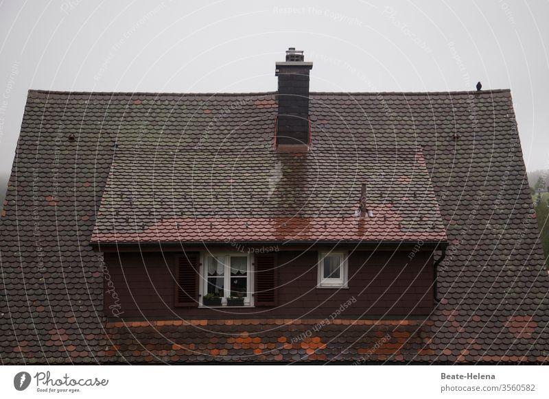 It's a rainy day - kleiner Vogel sitzt auf regennassem Dach Regen Nass Wetter trüb schlechtes Wetter Außenaufnahme grau Wasser Menschenleer Warten Wassertropfen