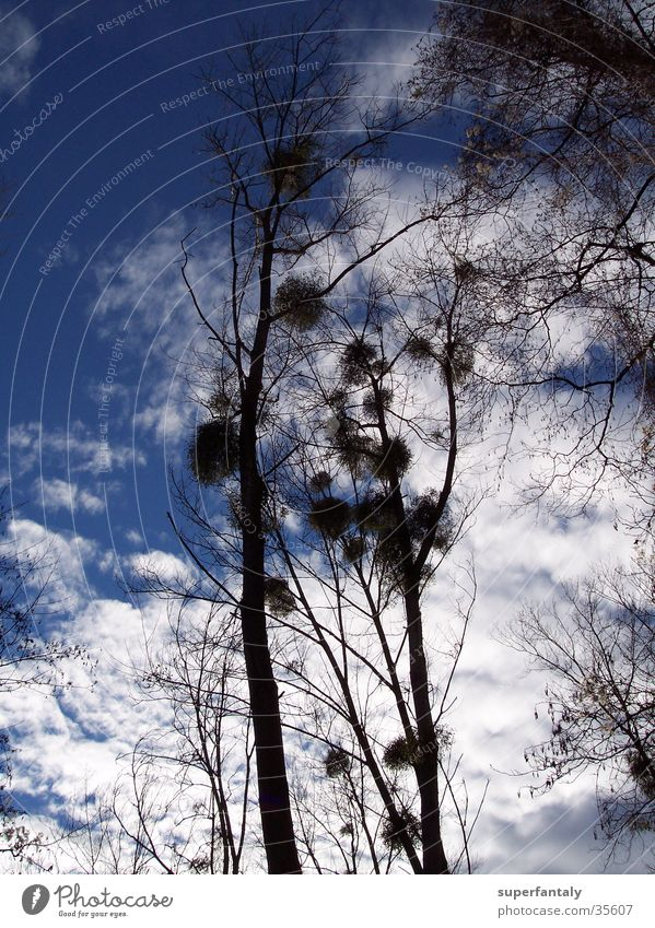 herbstbaum kitzelt himmel Baum Wolken Herbst Himmel blau